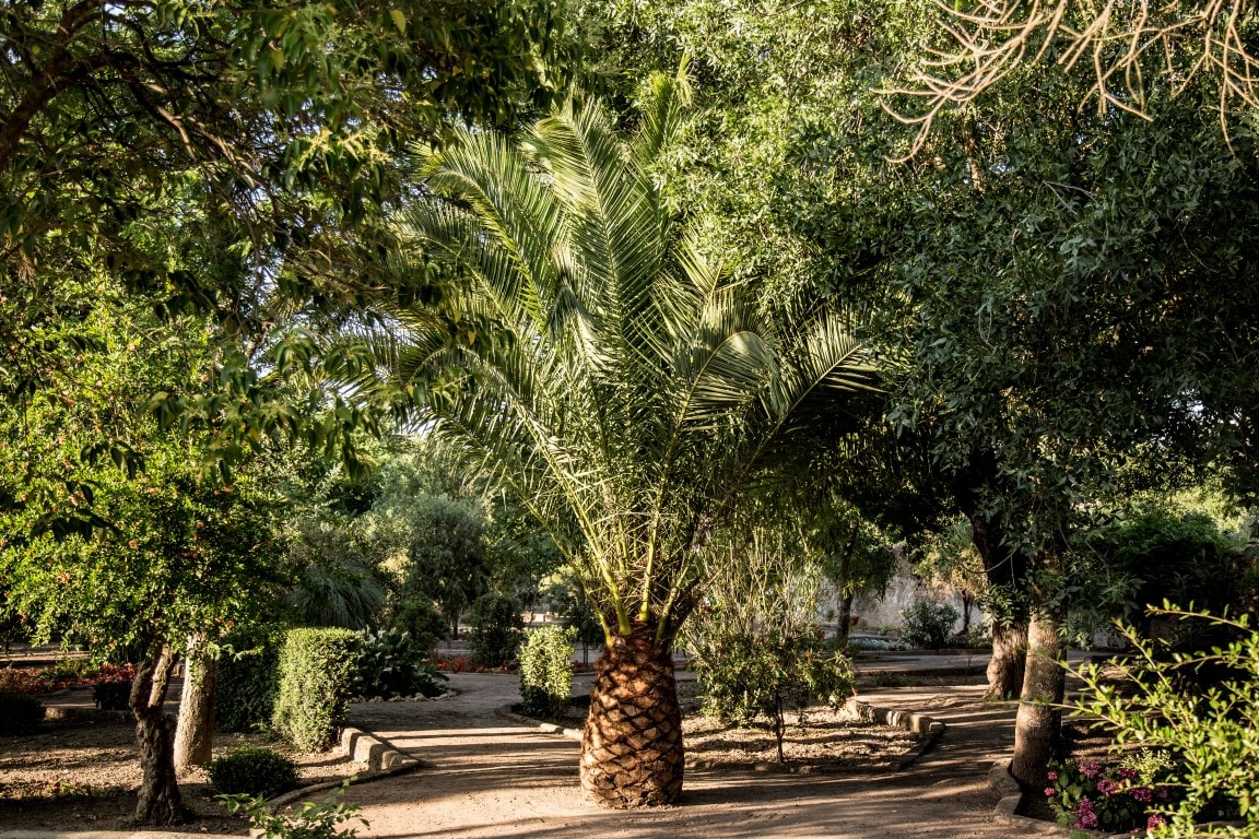 Jardín del Castillo de Cáceres
